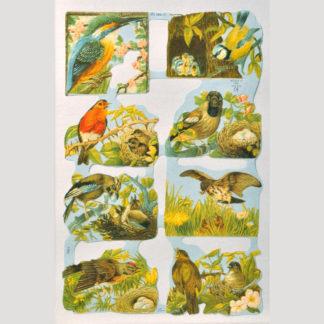 Birds Scrap Sheet 1
