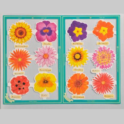Floral Serendipity Scrap Sheet